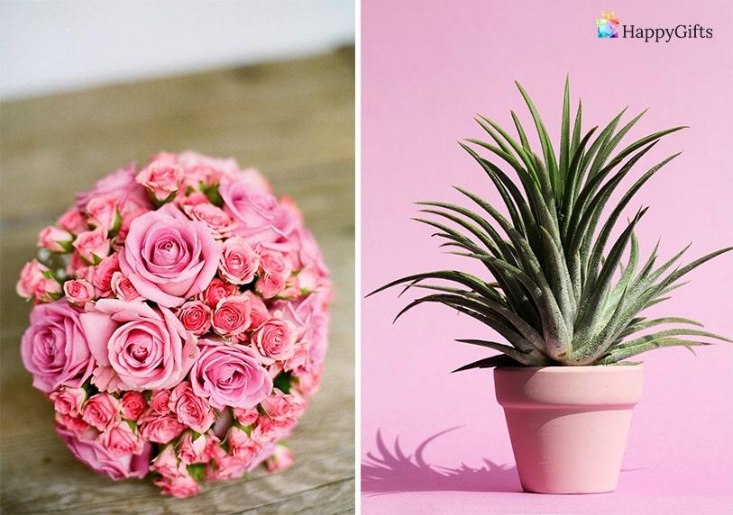 подходящ подарък за жена имен ден цветница букет красиви цветя цвете в саксия