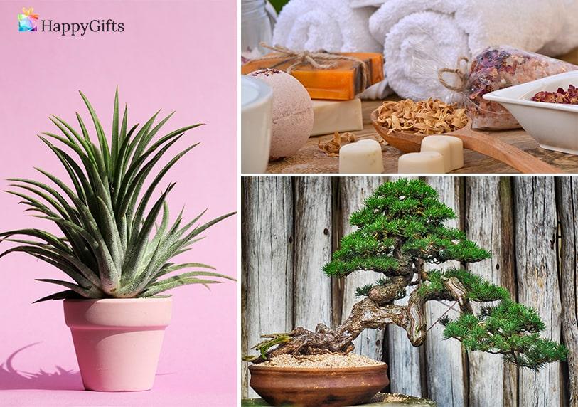 подарък от зет за тъща за 8-ми март; цвете в саксия, козметичен комплект, бонсай дръвче